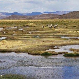 Trek-Canyon-Colca-Pérou