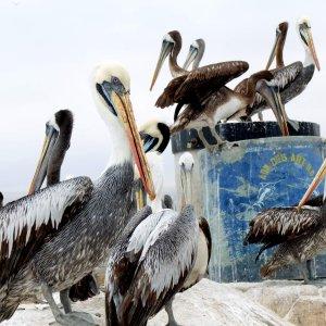 Voyage-paracas-pérou
