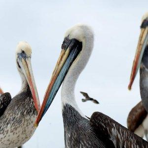 paracas-voyage-alpinca-pérou