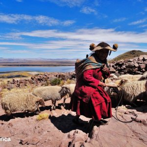 Quechua woman shepherd in Titicaca Lake
