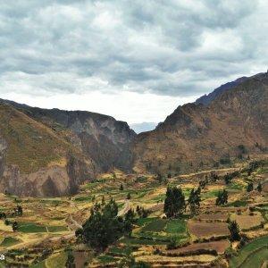 Canyon de Colca et ses terrasses