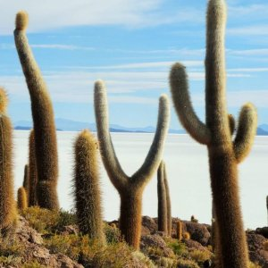 Ile Incahuasi au Salar d'Uyuni - Bolivie