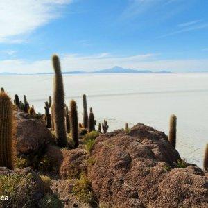 Isla Incahuasi - Salar d'Uyuni en Bolivie