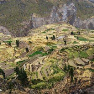 Le Colca et ses terrasses